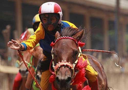 tác hại của đua ngựa