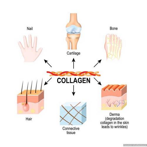 vai-tro-cua-collagen-type-2